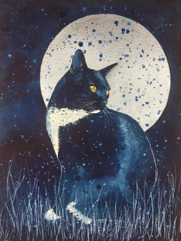 cat and the night sky
